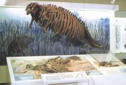 Photograph:Model skeleton of the Yamagata sea cow 'Yamagata Kaigyu'